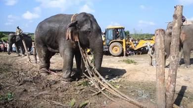 """نفوق الفيل """"بن لادن"""" في الهند"""