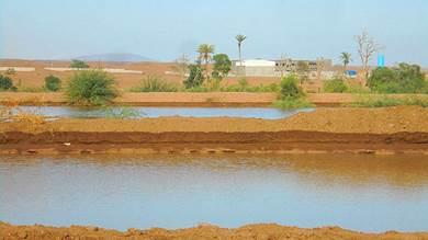 """""""الزراعة"""" بلحج تصرف أراضي لمستثمر كانت خططتها لمواطنين"""