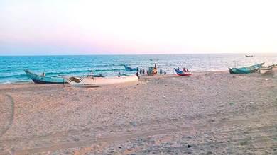 انتشار قناديل البحر في سواحل أحور يثير مخاوف الصيادين