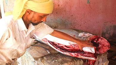 أسعار خيالية للأسماك في عدن ولحج