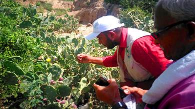 مختصون في البيئة يدرسون انتشار حشرة البق وأثرها على الزراعة بلحج