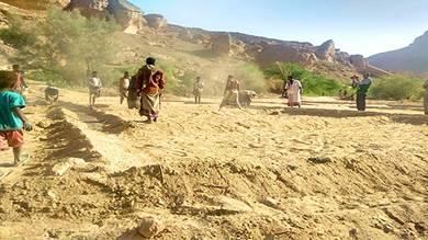 تدشين موسم محصول القمح بوادي المسيلة بالمهرة